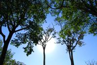 Looong Tree 4