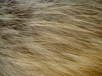 fur horizontal