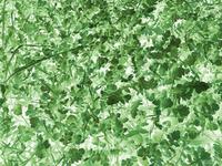 Greenery 01