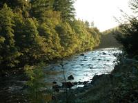 Scottish Brook
