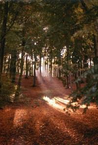 forestlight 2