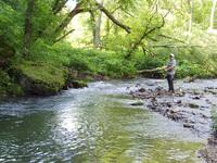 Trout Stream Fisherman