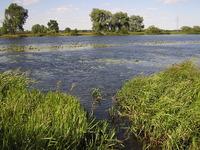A wild pond