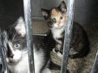 Kittens in Jail 4