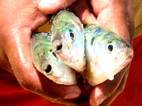 Holding Fishs
