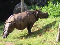 zoological garden 2