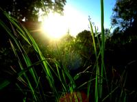 grass & sun