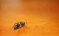 Shiny Ant 1