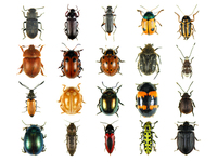 insect_world_ 1