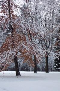 Winter Wonders 2