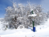 Cold Snow 4