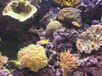 Shedd Aquarium, Chicago 3
