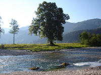 river Ybbs, Austria 3