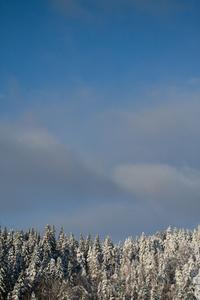 Sky Woods One