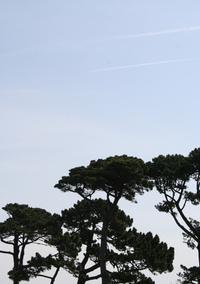 trees on sky
