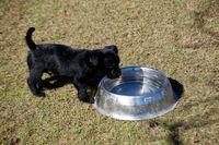 Tiny dog at dog park