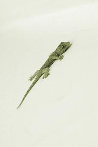 Reptile In Green Sepia