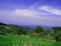 Grass, Tree & Sky