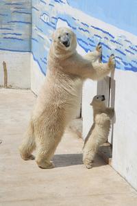 bear and son