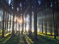 Forest Upper Austria