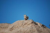 Squirrel Sentinel