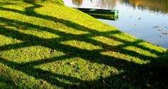 SHADOWS ON THE GRAS IN OTOCEC NA KRKI SLOVENIA