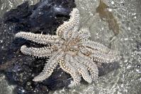 Ocean starfish on the rock