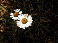 Flora 4
