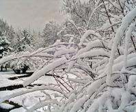 The First Snow in Ankara