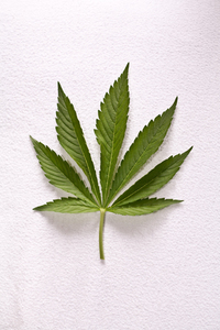 Dutch weed