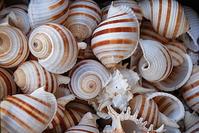 Sea shells texture 3