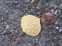 Raindrops on leaves 1