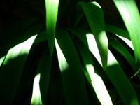 light effect series 3