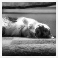 Zizi, the cat