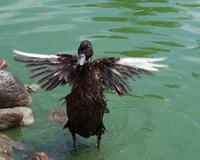 duck games