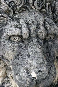 Lion face