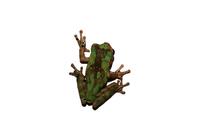 little frog 1