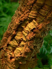 nature textures 2