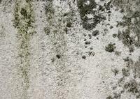 Ancient Limestone