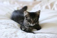 Kitten Schnitten