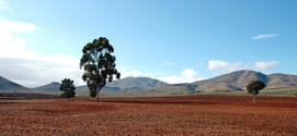 One dry farm