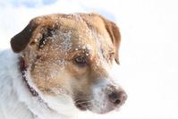 Snowy Dog 2