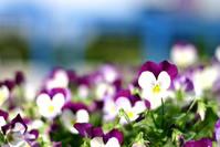 cute flower 2