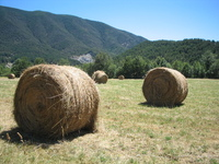 Ears field rural