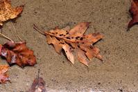 Watery Autumn Repose