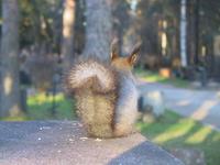 Depressed squirrel