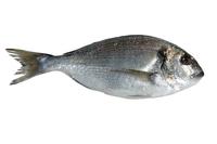 fish 29