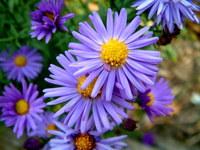 purple flower 648