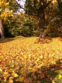 Autumn in Poland