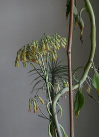 succulente blossom